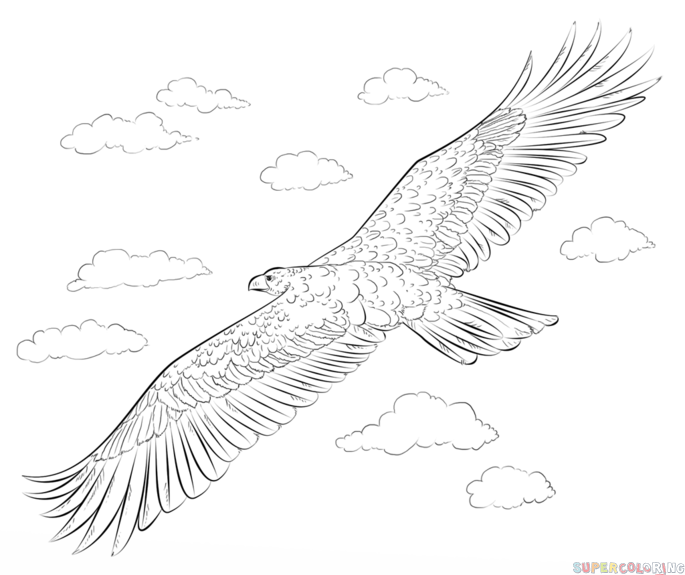 golden eagle drawing how to draw a golden eagle step by step drawing tutorials drawing golden eagle