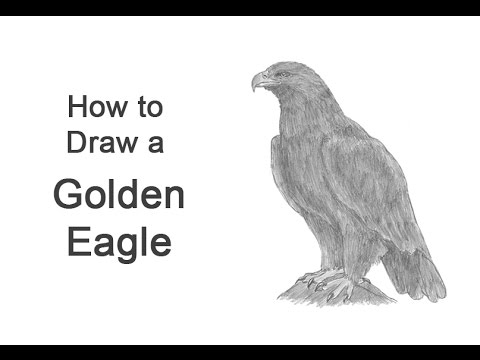 golden eagle drawing how to draw a golden eagle youtube drawing eagle golden
