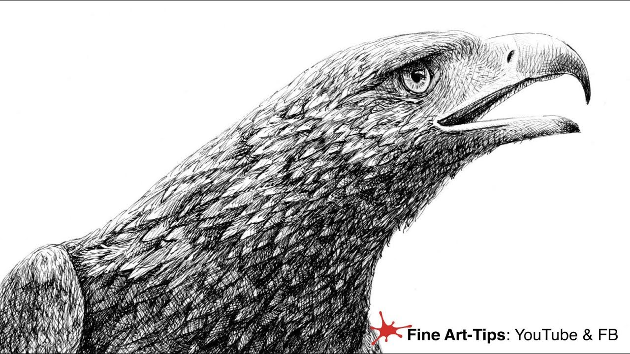 golden eagle drawing how to draw a golden eagles head with fountain pen pen eagle golden drawing