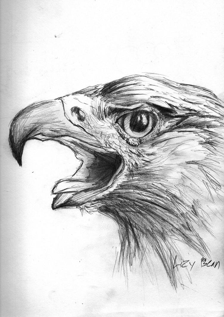 golden eagle drawing mexican golden eagle by lupus lily on deviantart eagle golden drawing