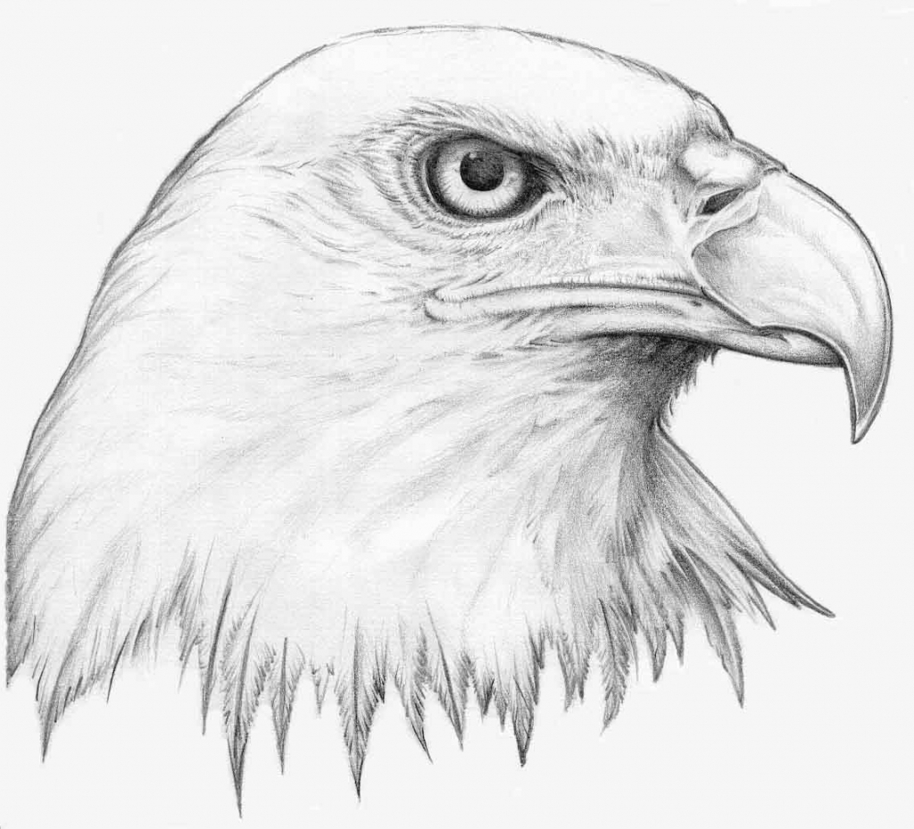 golden eagle drawing realistic eagle drawing at getdrawings free download drawing eagle golden