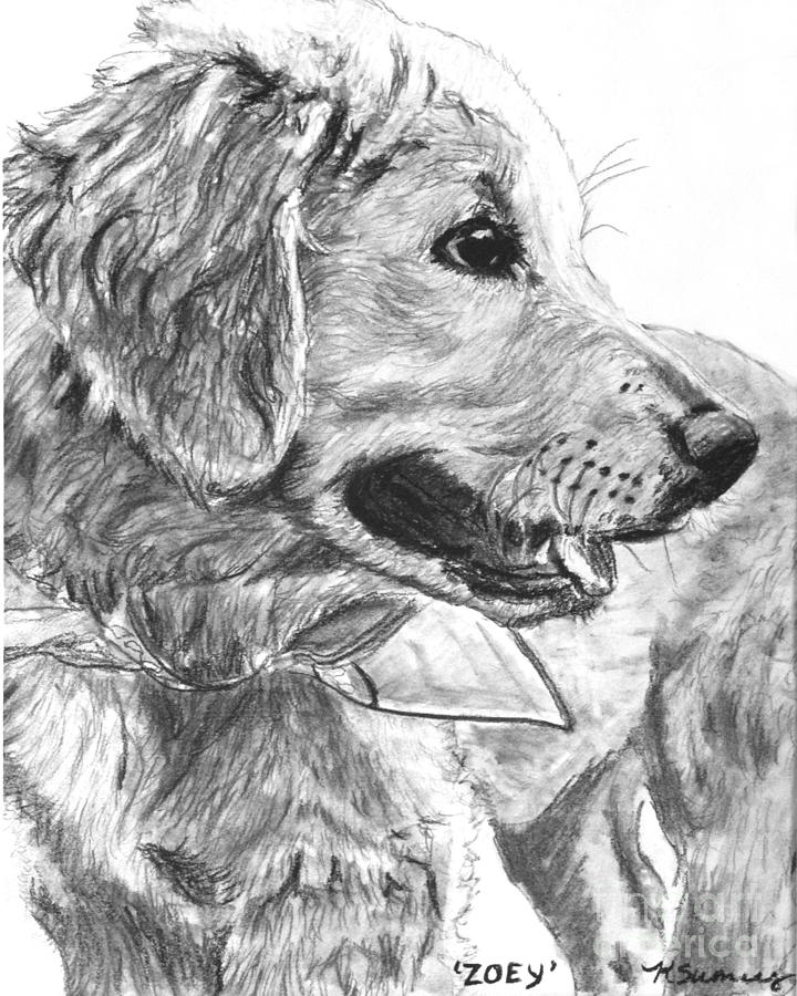 golden retriever drawing dog golden retriever puppy pencil drawing print a4 only retriever drawing golden