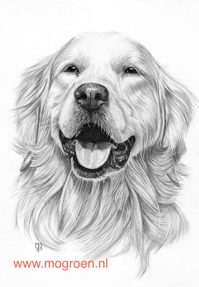 golden retriever drawing drawing of a golden retriever by crystafirey on deviantart golden retriever drawing
