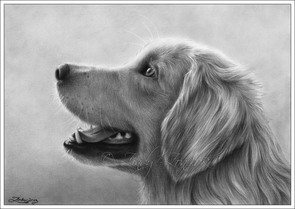 golden retriever drawing drawn golden retriever pencil drawing pencil and in drawing golden retriever