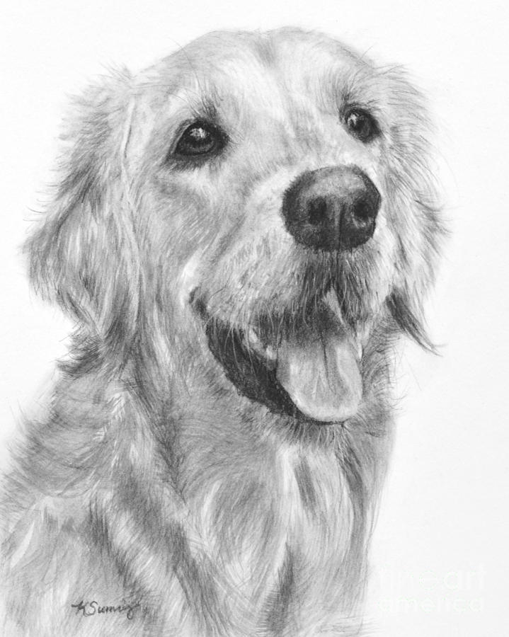 golden retriever drawing golden retriever 026 drawing by abbey noelle golden retriever drawing
