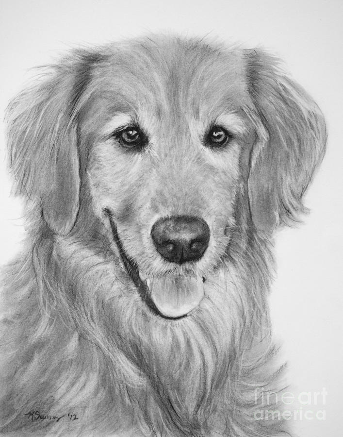 golden retriever drawing golden retriever art pencil drawing print a3 a4 sizes golden retriever drawing