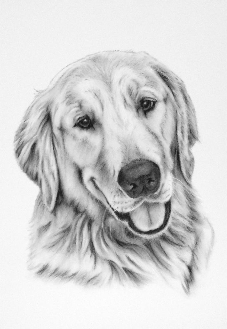 golden retriever drawing golden retriever art print of drawing 8x10 golden dog art golden retriever drawing