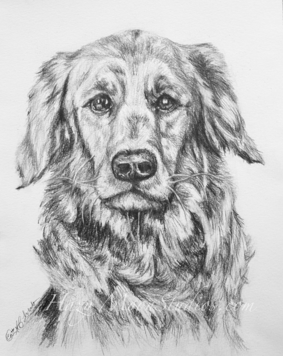 golden retriever drawing golden retriever drawing by john stuart webbstock drawing golden retriever