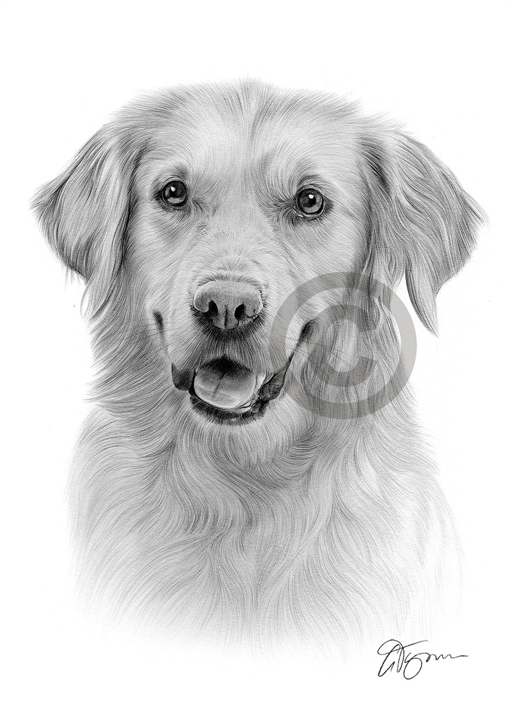 golden retriever drawing golden retriever duncan drawing by kate sumners retriever golden drawing
