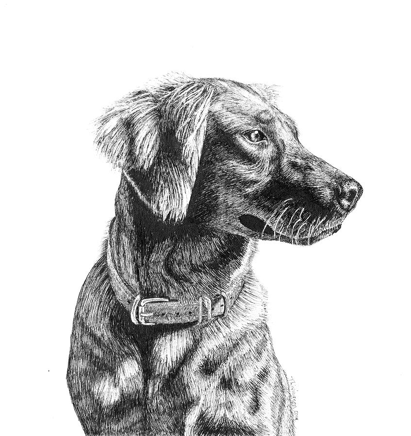 golden retriever drawing golden retriever i thought i was done with this drawing drawing golden retriever