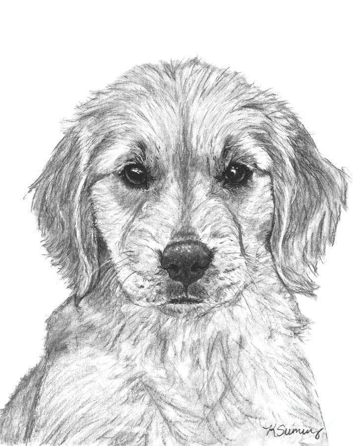 golden retriever drawing golden retriever puppy in profile drawing by kate sumners drawing golden retriever