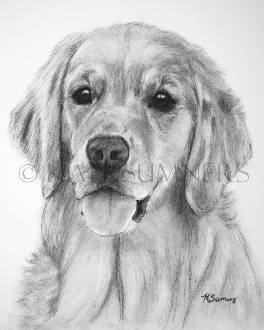 golden retriever drawing golden retriever sketch drawing by kate sumners retriever golden drawing