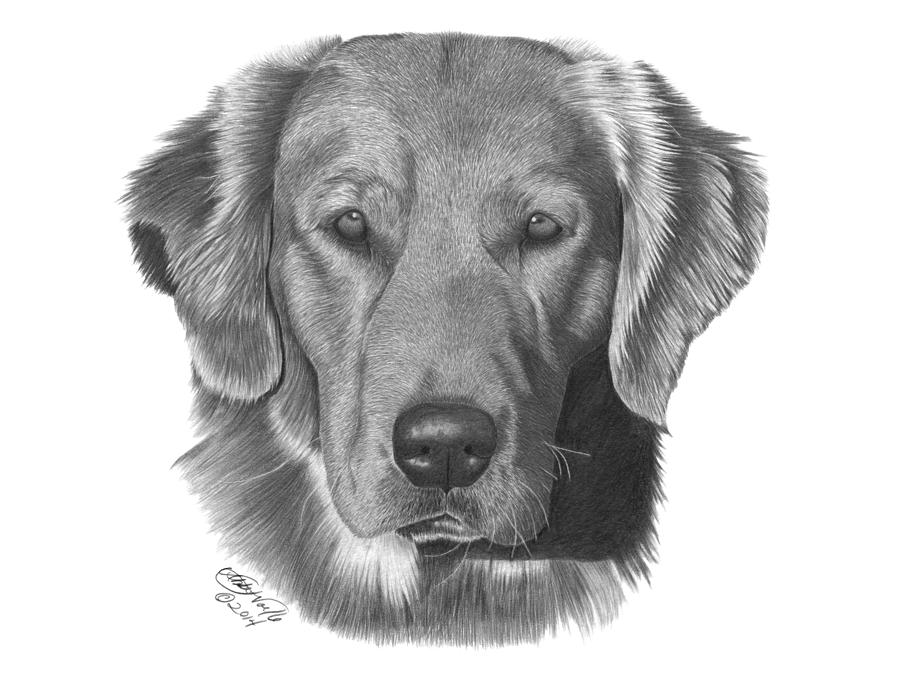golden retriever drawing golden retriever where39s my treat by zindy on deviantart drawing retriever golden