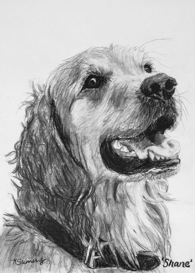 golden retriever drawing jkt art golden retriever portrait drawing retriever golden