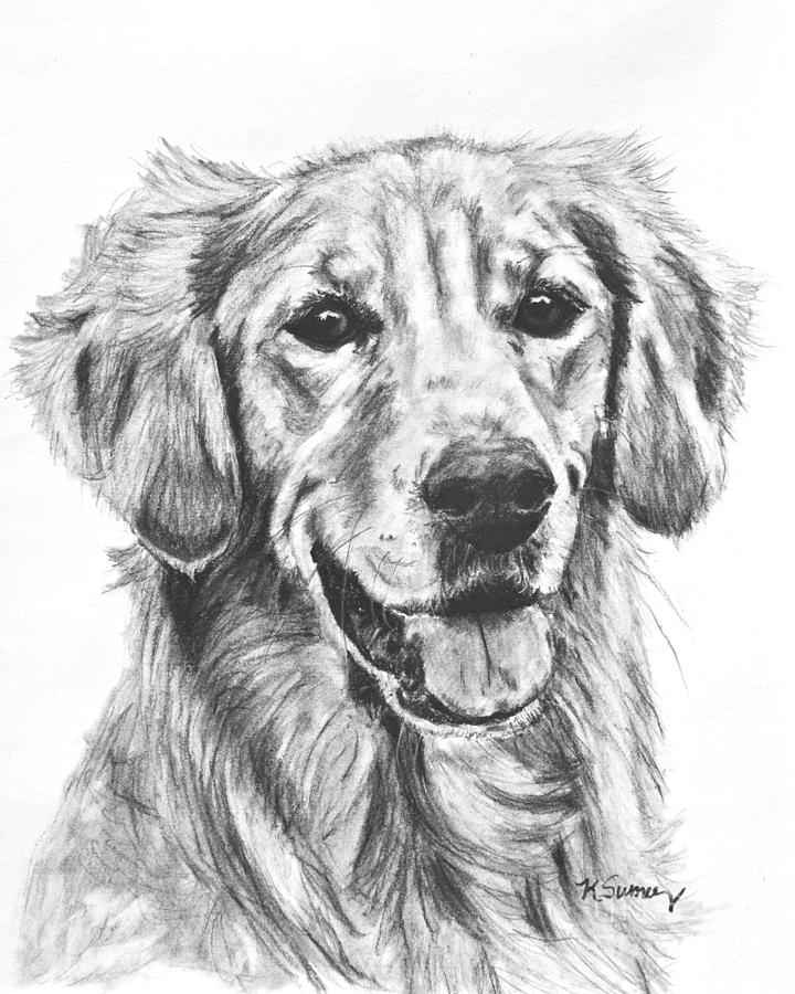 golden retriever drawing original pencil drawing of a golden retriever free shipping retriever golden drawing