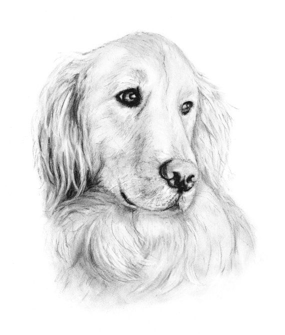 golden retriever drawing wet smiling golden retriever shane drawing by kate sumners retriever drawing golden