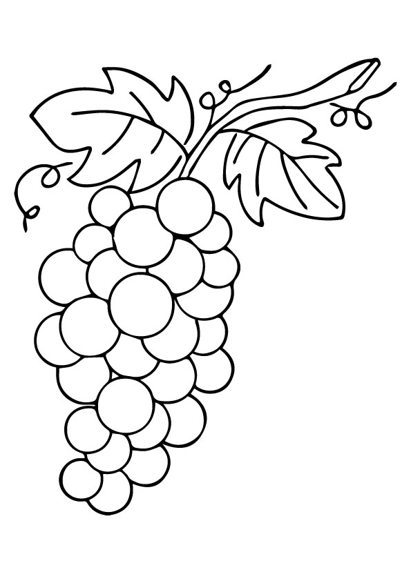 grapes coloring worksheet how to draw grapes coloring pages color luna worksheet grapes coloring