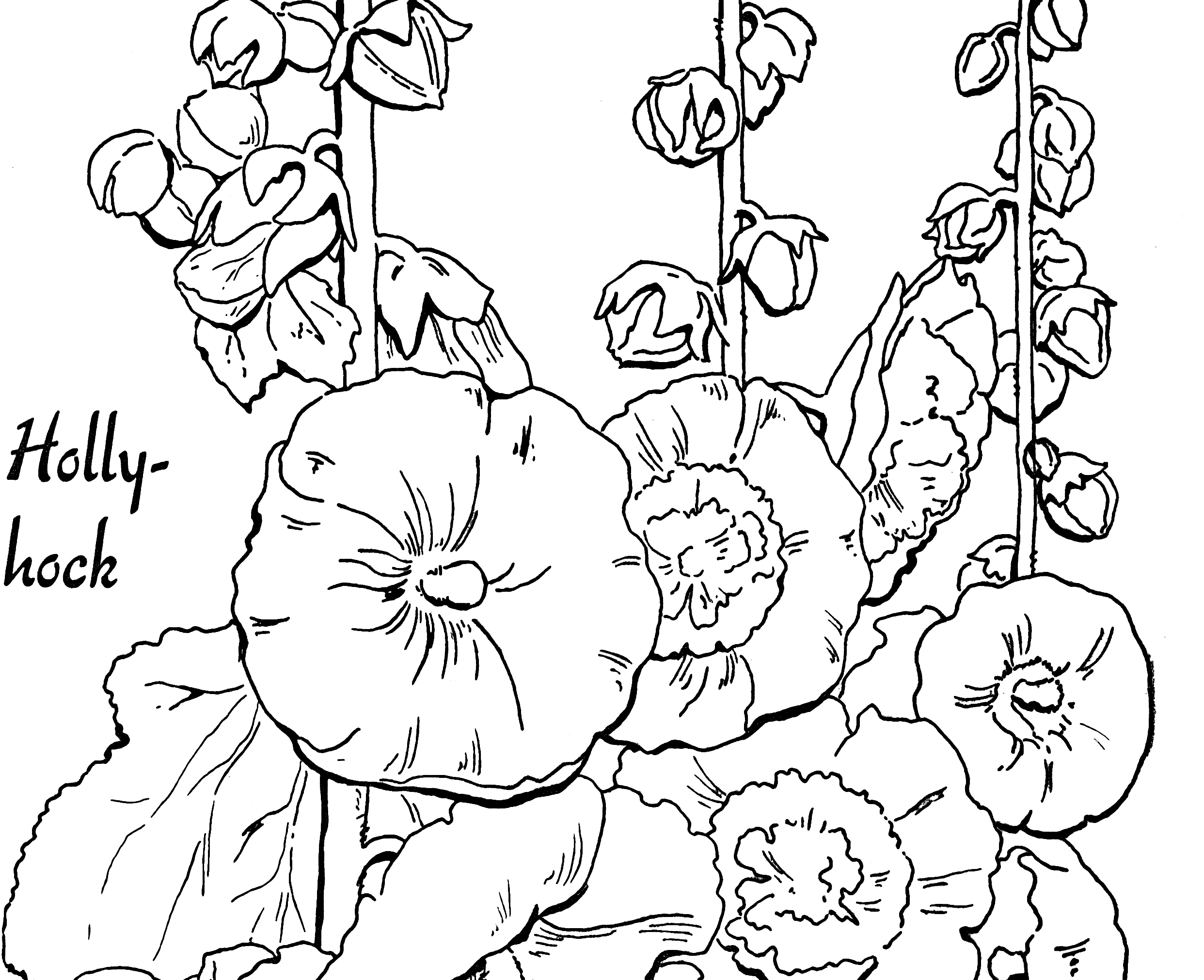 graphic art coloring pages line art coloring page bird with blossoms the graphic art coloring pages
