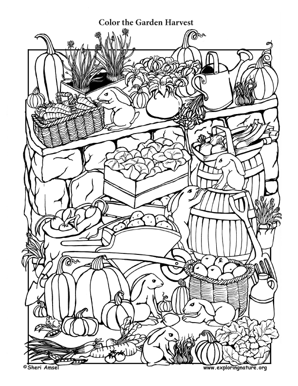 harvest coloring pages garden harvest coloring page coloring harvest pages
