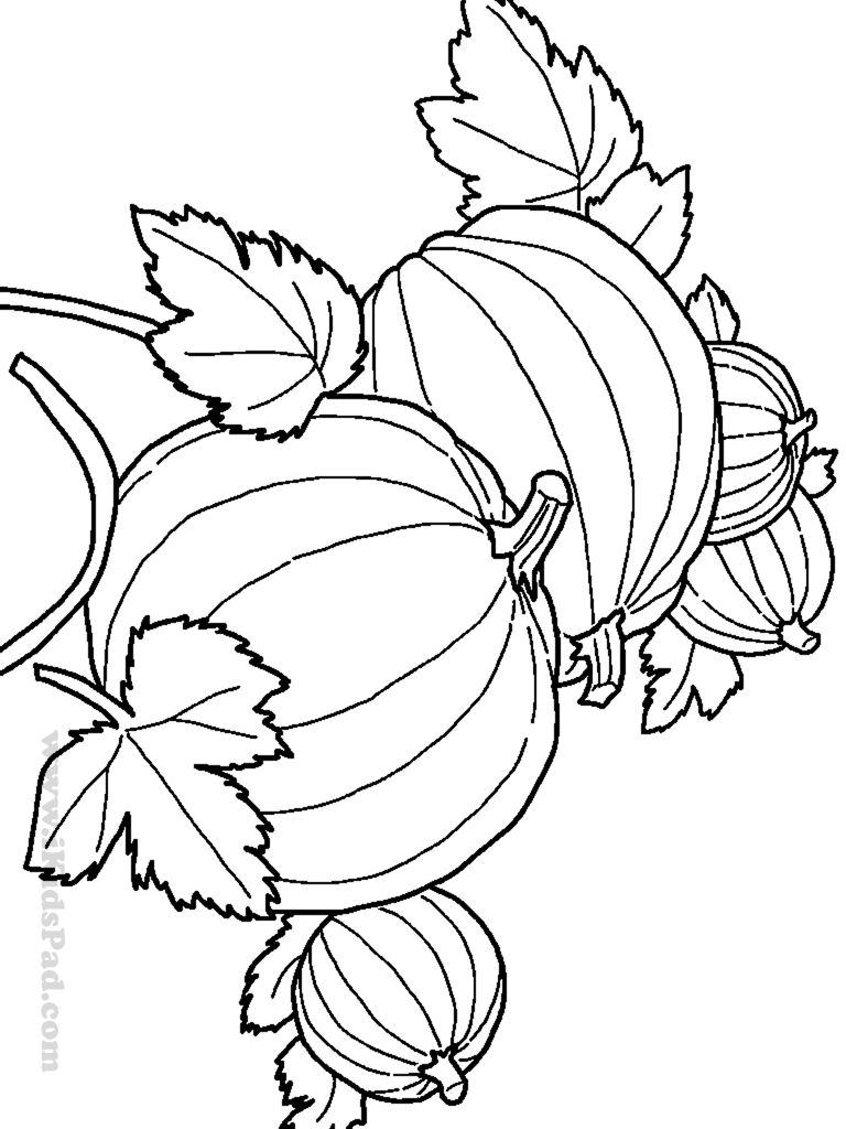 harvest coloring pages printables harvest drawing at getdrawings free download printables harvest coloring pages