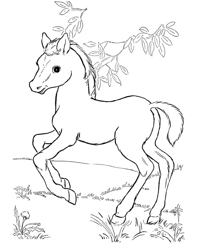 horse for coloring fun horse coloring pages for your kids printable for horse coloring