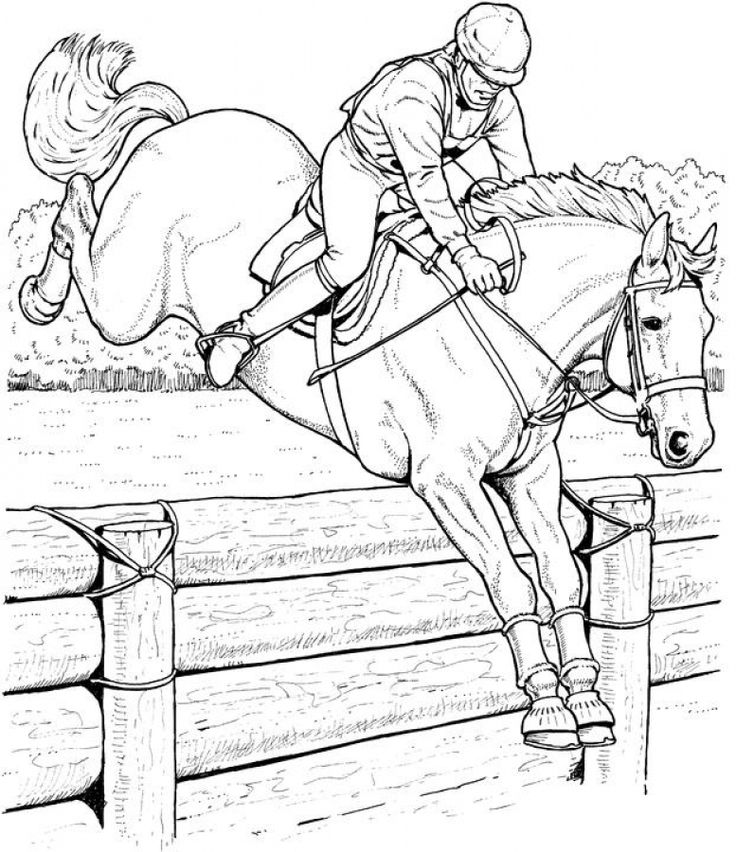 horse pictures to print out 316 best animal coloring pages images on pinterest horse to out print pictures