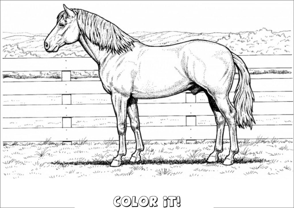 horse pictures to print out coloring pages horse coloring pages that you can color horse print out to pictures