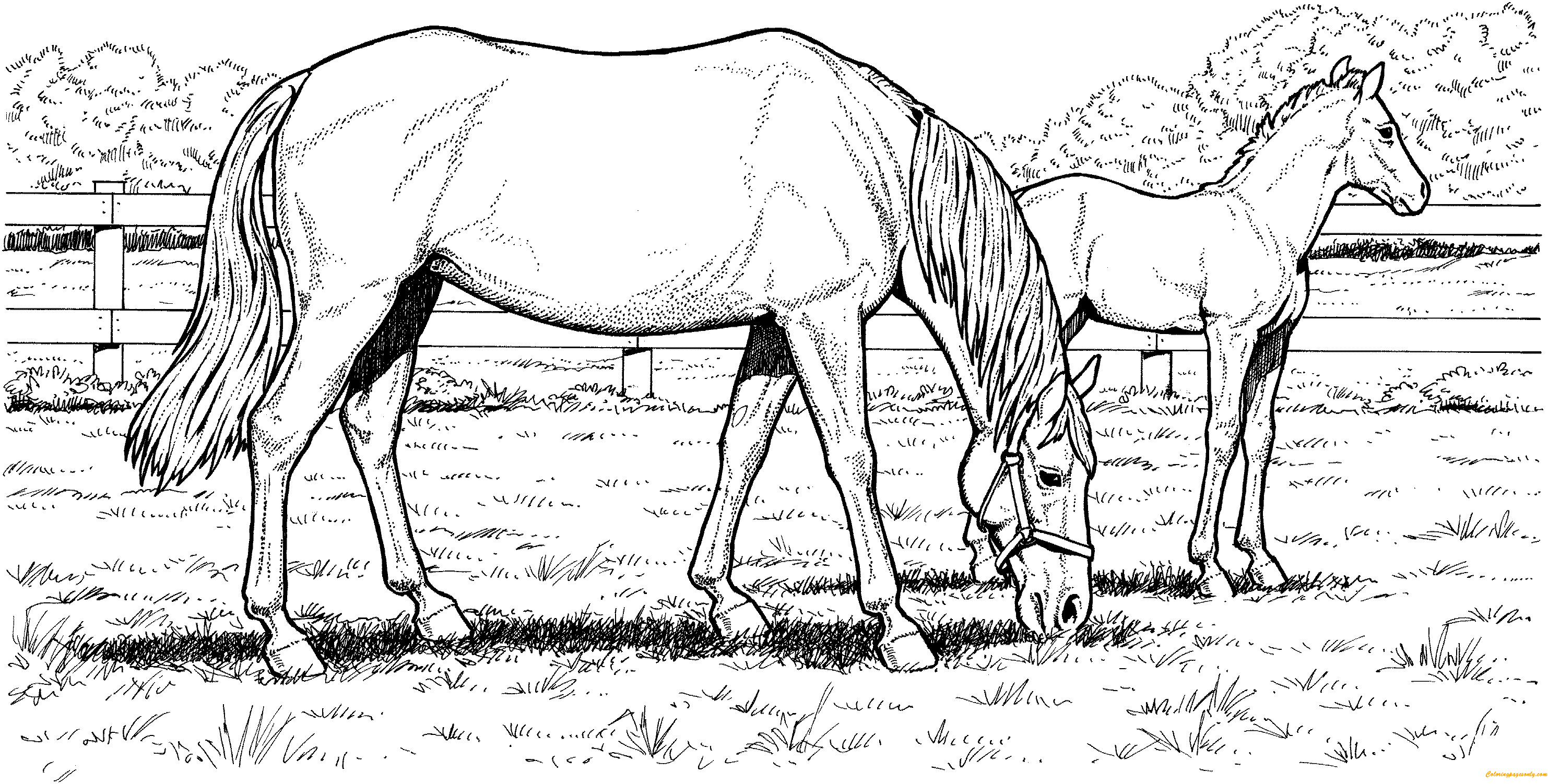 horse pictures to print out grazzing mare horse hard coloring page free coloring pictures to horse out print