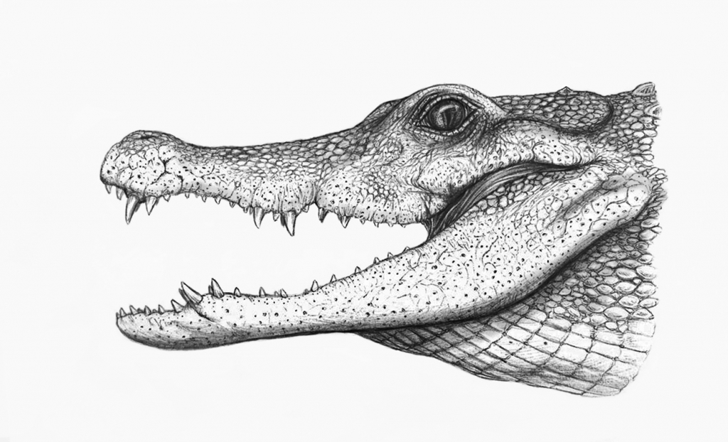 how to draw a alligator face crocodile drawing pencil sketch colorful realistic art alligator how to draw a face