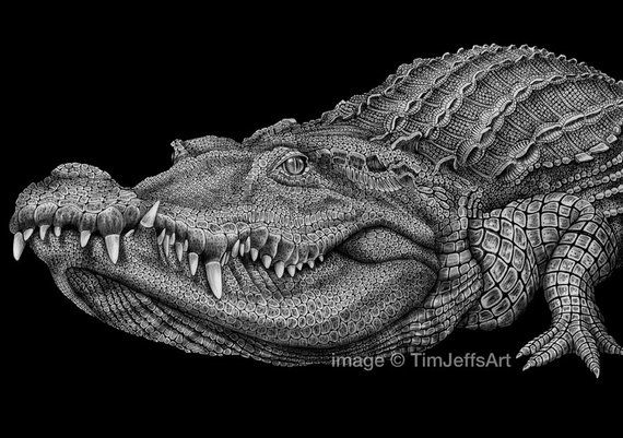 how to draw a alligator face crocodile ink drawing realistic drawings ink drawing to alligator face how draw a