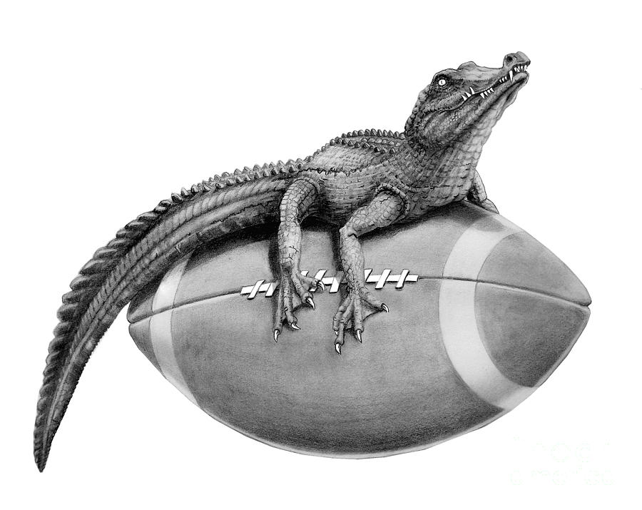 how to draw a alligator face gator football drawing by murphy elliott a to how face alligator draw