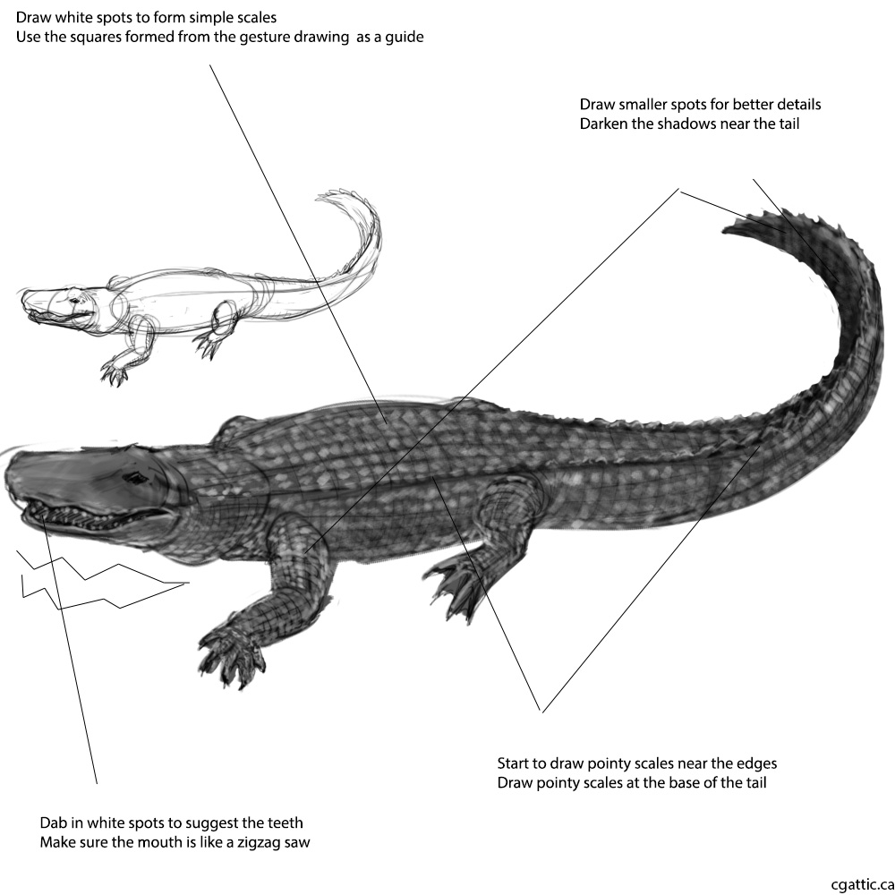 how to draw a alligator face how to draw an alligator in 4 steps with photoshop how to alligator a draw face