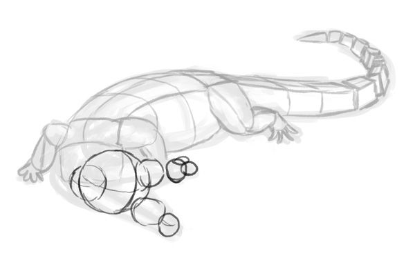 how to draw a alligator face how to draw animals crocodiles alligators caimans and how a to face draw alligator