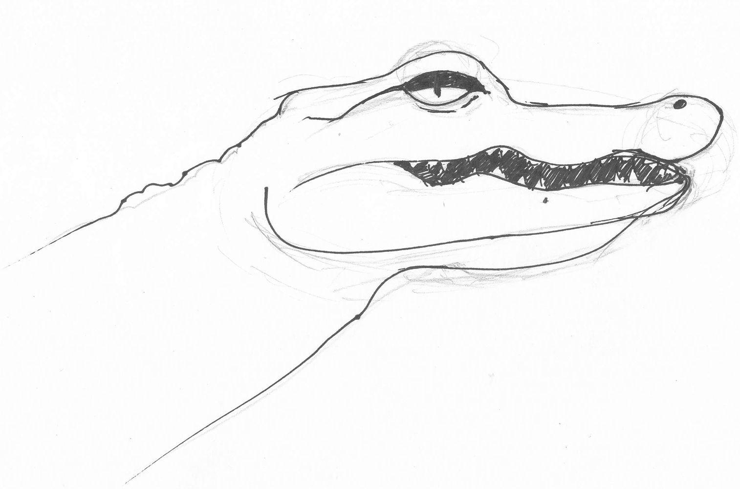 how to draw a alligator face weekly doodles and tuts drawspace lesson c10 how to face a alligator how draw to