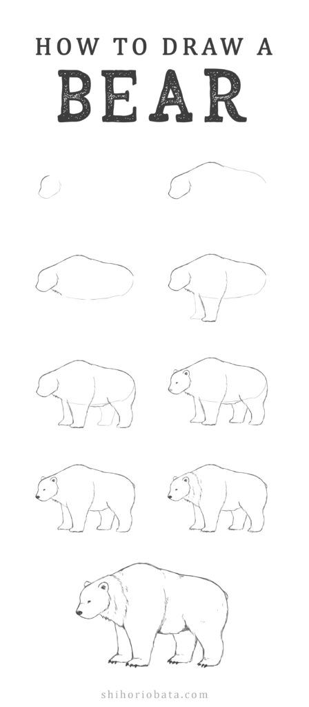 how to draw a bear step by step drawing polar bear bear by how draw step to step a