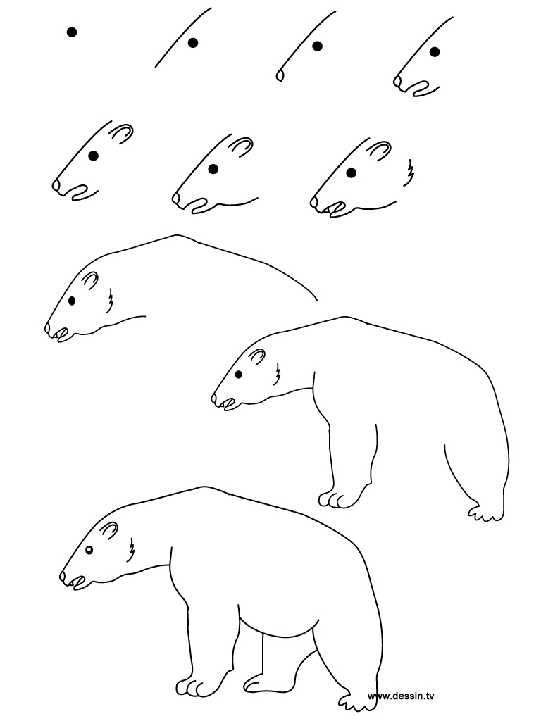 how to draw a bear step by step easy to draw bear standig how to draw bears step 6 to by how step step a bear draw