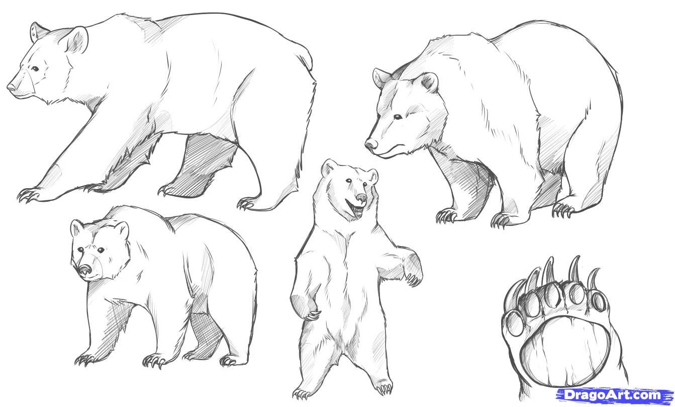 how to draw a bear step by step how to draw 4 kawaii animals step by step cute bear step how by draw step a to bear