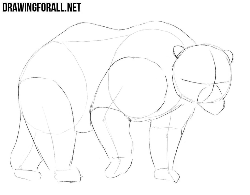 how to draw a bear step by step how to draw a baby bear drawingforallnet by to a how step draw bear step