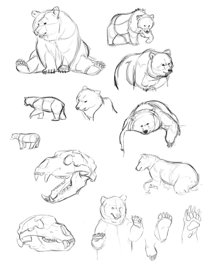 how to draw a bear step by step how to draw a cartoon bear step by step cartoon animals step how step to a draw bear by