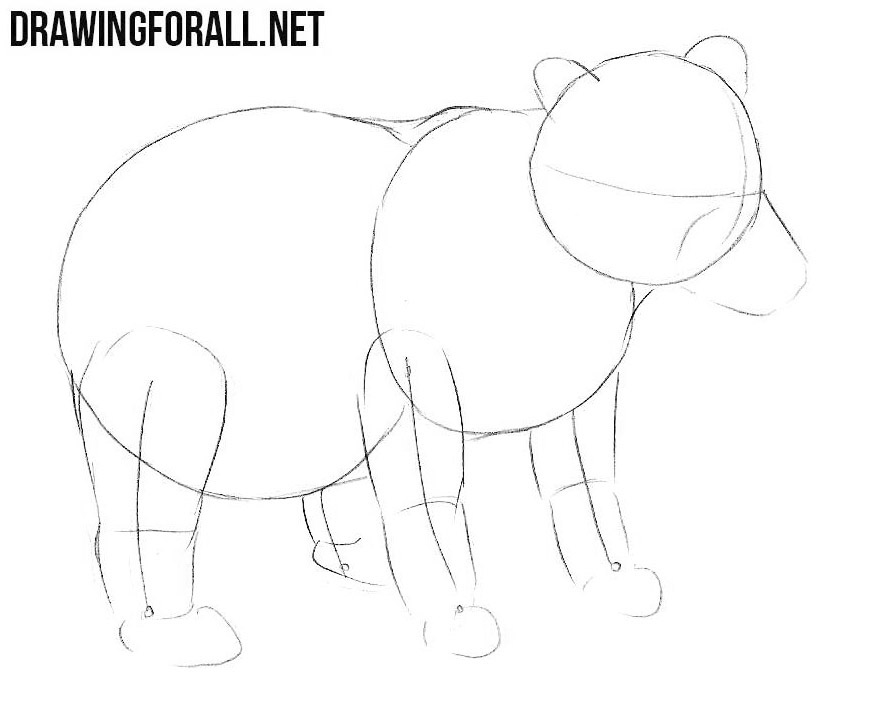 how to draw a bear step by step how to draw grizzly bear step by step drawing tutorials by step how bear step draw to a