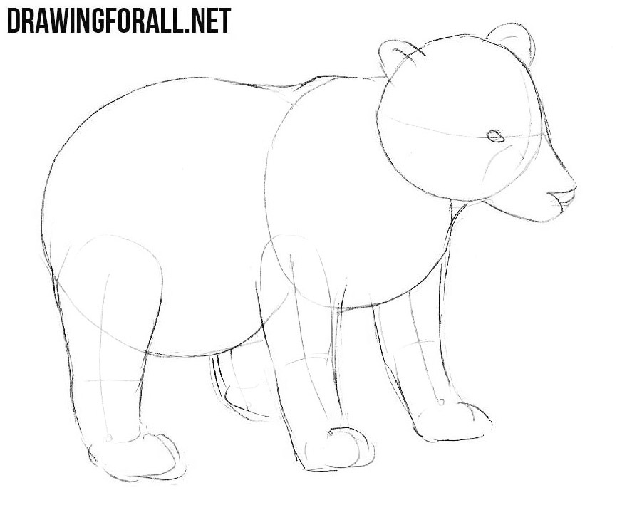 how to draw a bear step by step how to draw koala bear easy drawing step by step bear a to step draw step by how