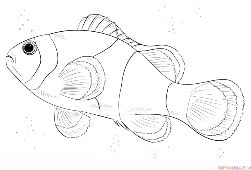 how to draw a clownfish clownfish drawing at getdrawings free download how draw a to clownfish