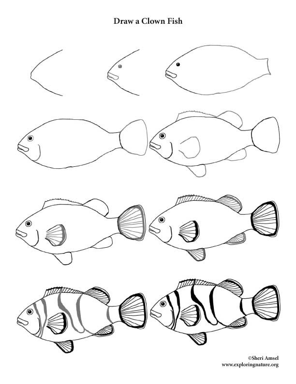 how to draw a clownfish clownfish drawing at getdrawings free download how draw clownfish to a