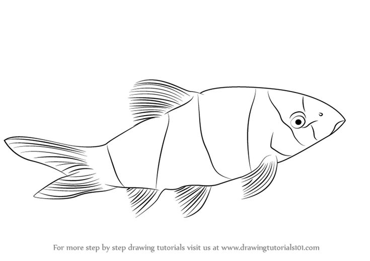 how to draw a clownfish draw a coral reef clownfish to draw a how