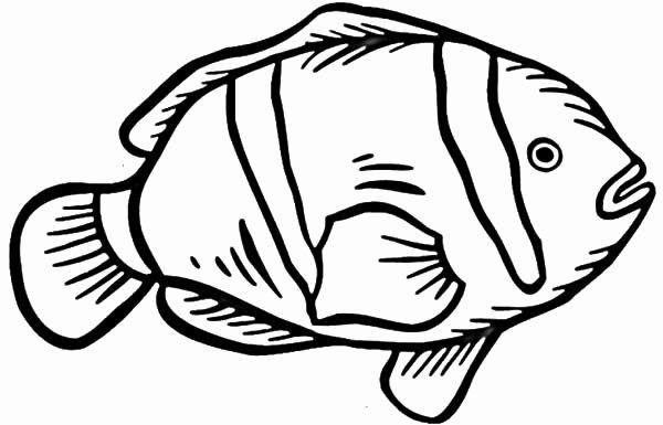how to draw a clownfish drawing nemo a draw to clownfish how