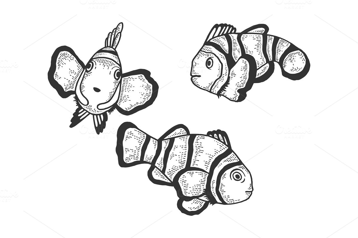 how to draw a clownfish how to draw clown fish coloring pages best place to color draw clownfish how to a