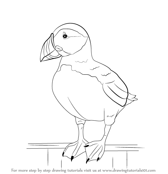 how to draw a puffin 29 free printable puffin rock coloring pages in vector draw to puffin how a