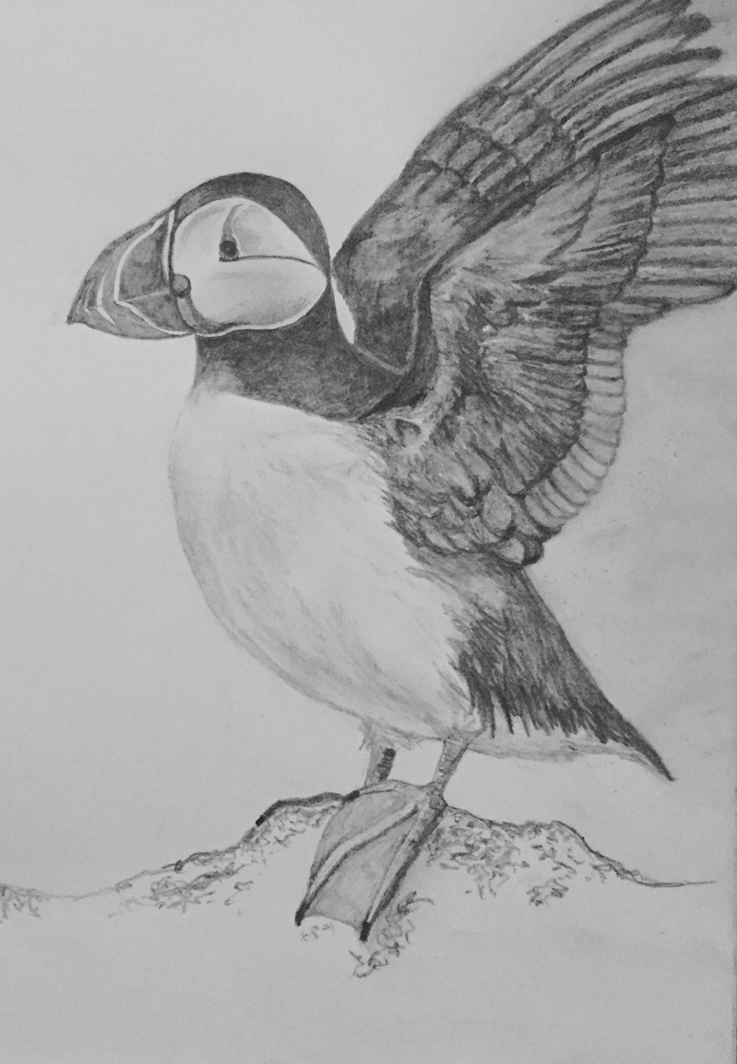 how to draw a puffin items similar to original bird drawing puffin drawing a how puffin to draw