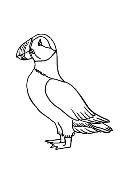 how to draw a puffin original pencil drawing puffin sketch bird art by seanssketch draw puffin a to how