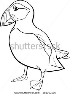how to draw a puffin puffin by scott woyak realistic animal drawings bird to a puffin how draw
